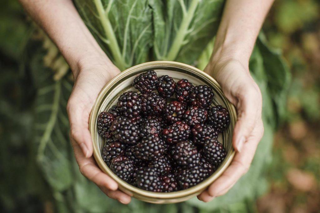 story-roya-blackberries