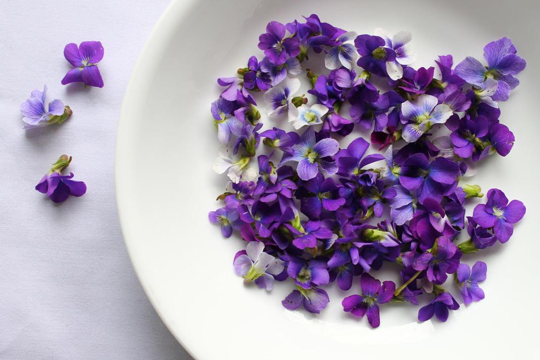 violet-jellies-prep